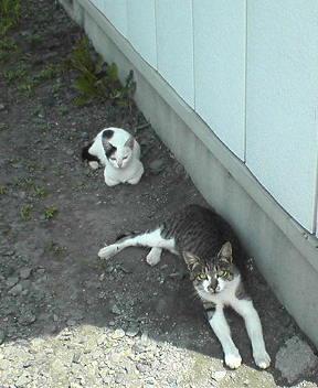 日陰の猫家族